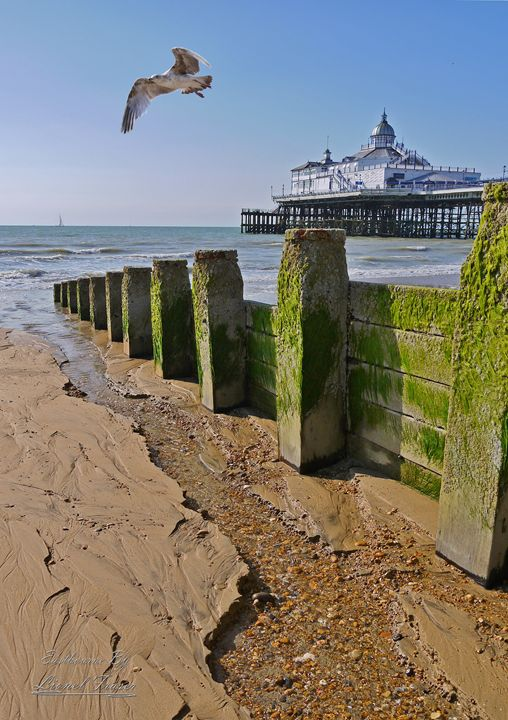 Eastbourne Beach Pier Seagull - Lionel Fraser, Pictures of Eastbourne, England