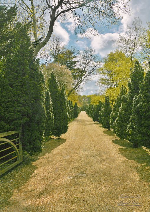 Driveway of Trees Country Estate - Lionel Fraser, Pictures of Eastbourne, England