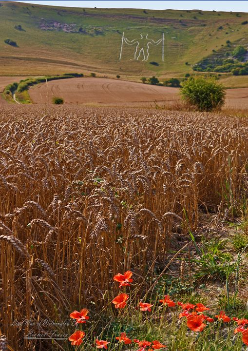 Long Man of Wilmington Corn Field - Lionel Fraser, Pictures of Eastbourne, England