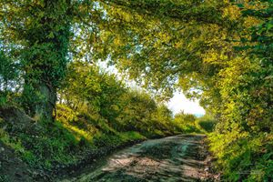 Country Lane in HDR