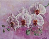 orchids,flowers,nature,realism