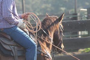 A day at the ranch - Rancho
