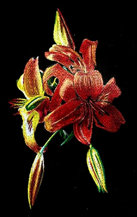 Tiger Lily - Rose K
