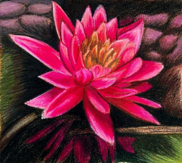 Water Lily - Rose K