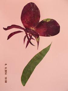 Dry flower card