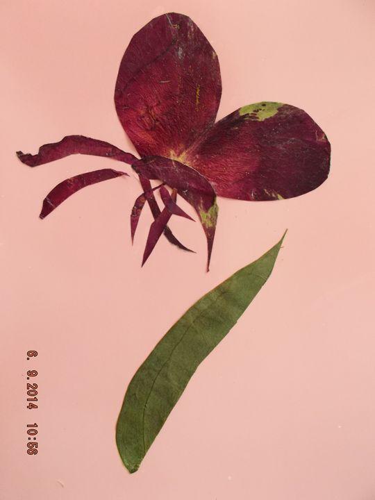 Dry flower card - Original Decrative Art