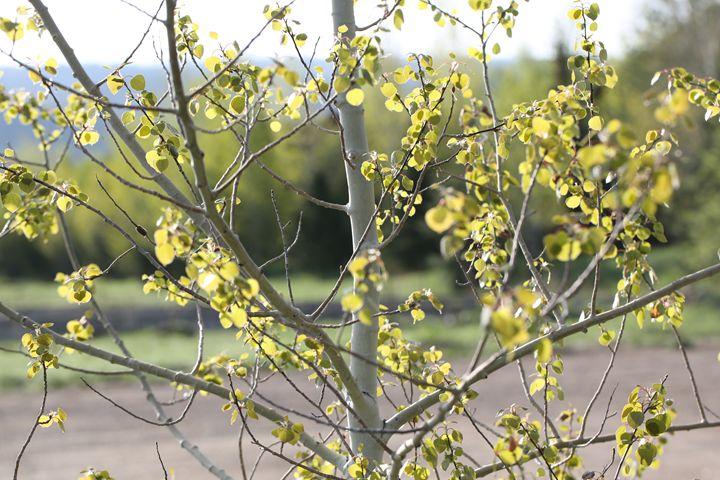 Leaves on tree. - Ely Greenhut