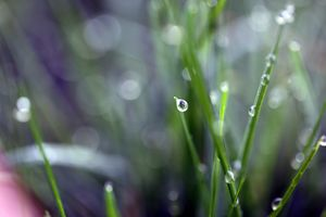 Dew drop on grass - Ely Greenhut