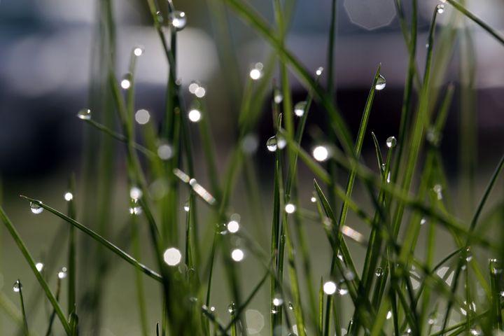 Dew drops on grass - Ely Greenhut