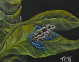 8 x 10 poison dart frog painting