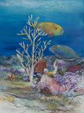 30 x 40 parrot fish painting