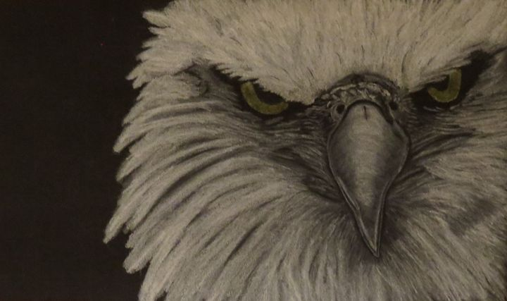 Bald Eagle - Amber McDowell