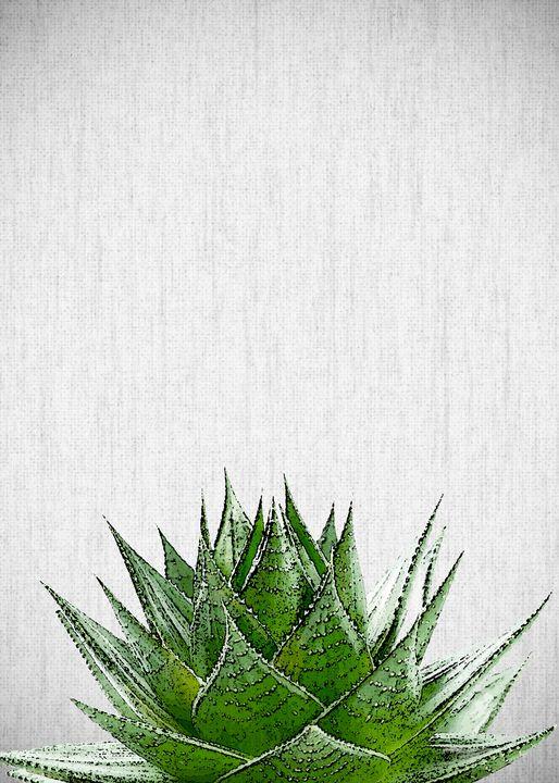 PLANTS15 - FARKI_DESIGN