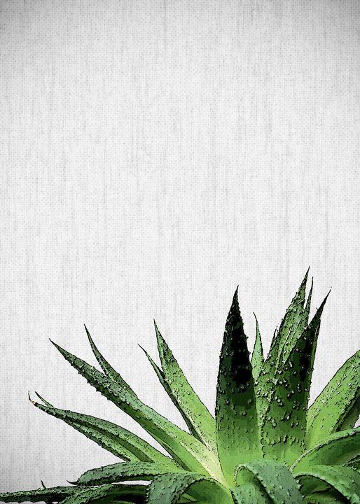 PLANTS27 - FARKI_DESIGN