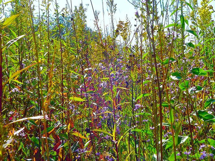 Wildflowers - Matte Hue Innovations