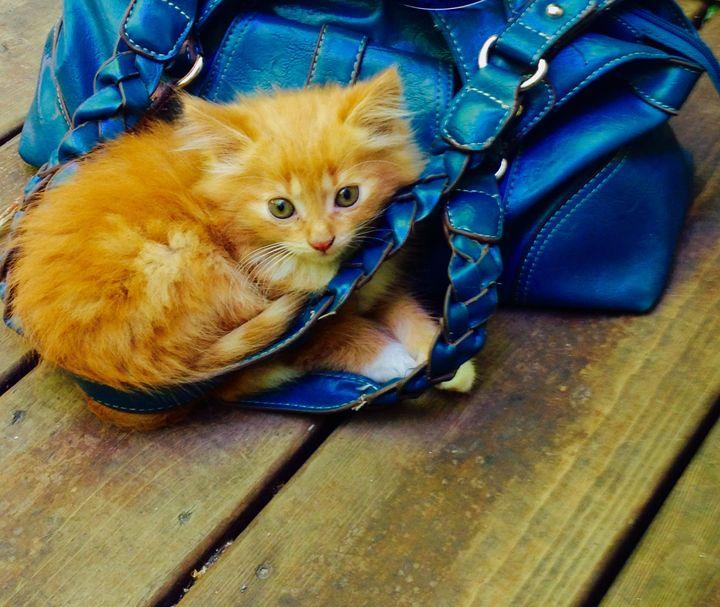 Bitty Kitty - Meriena Kirsopp