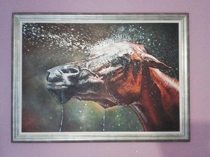 Horse beauty -  Eeericbogdan