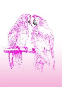Pink Parrots - Feel Good Creations