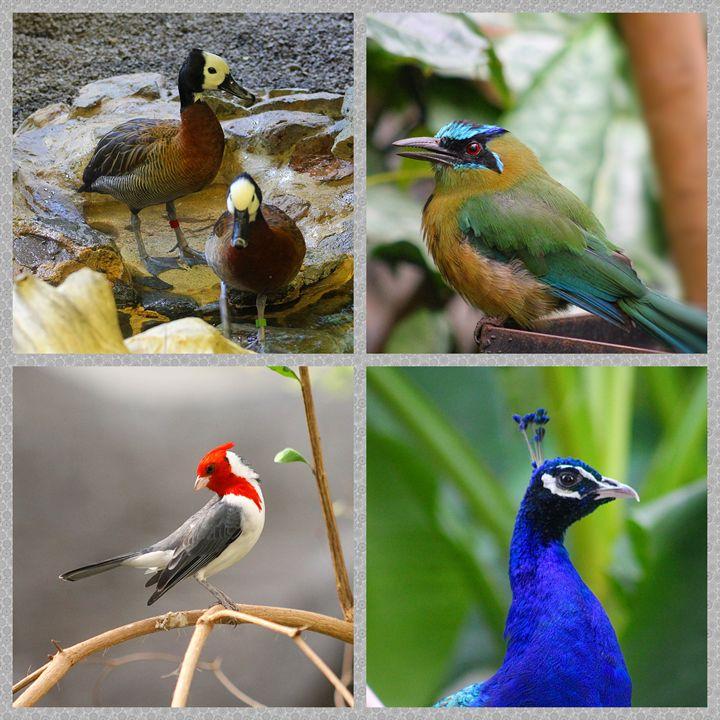 a Myriad of birds - Yankee Dervish