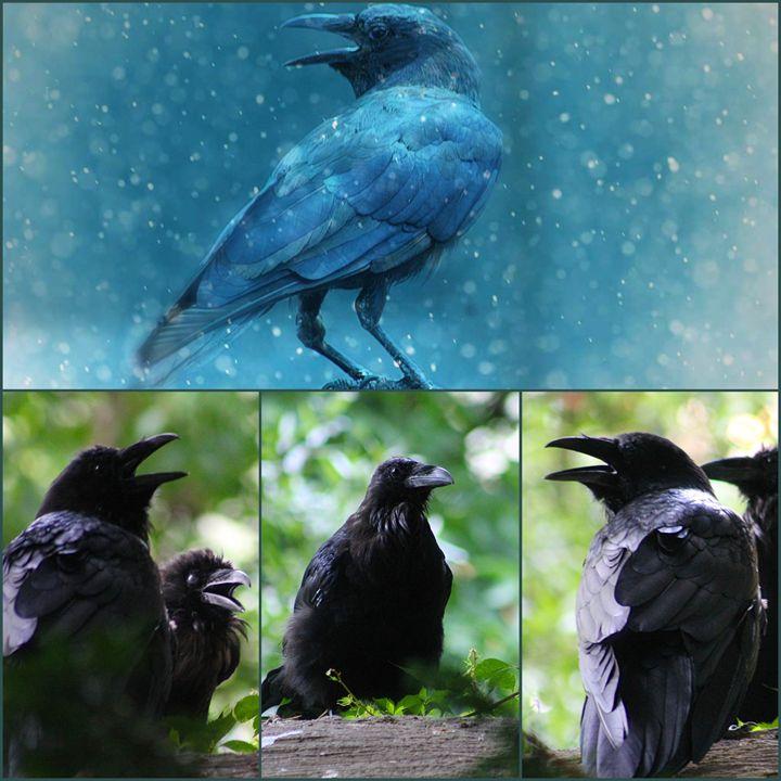 a murder of crows - Yankee Dervish