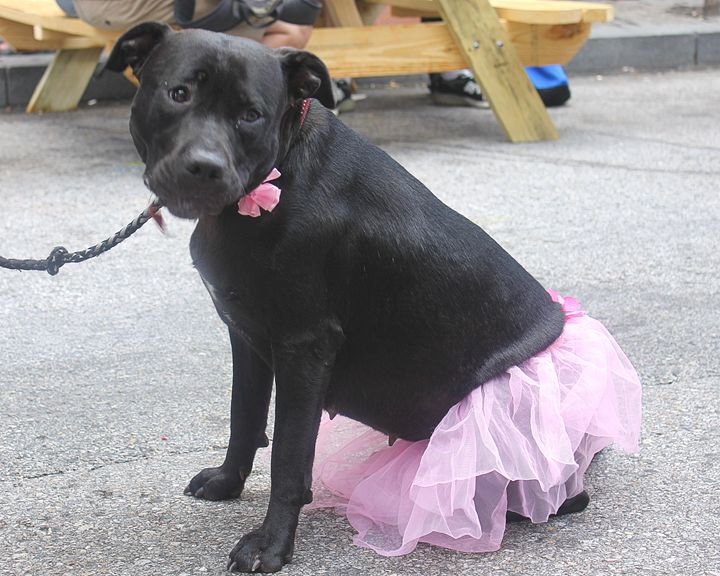 Doggie princess - Yankee Dervish