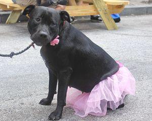 Doggie princess