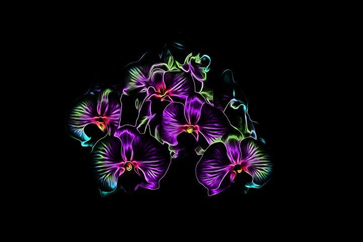 Orchide - Gallogeta