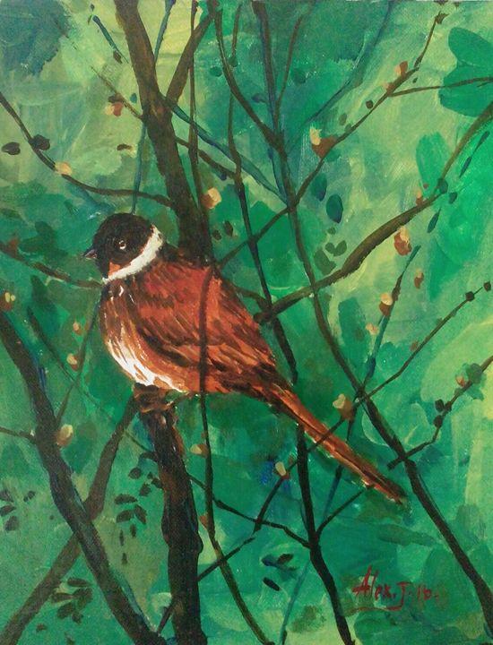 Garden Bird - Alex John
