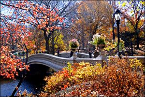Bow Bridge in Autumn,Central Park