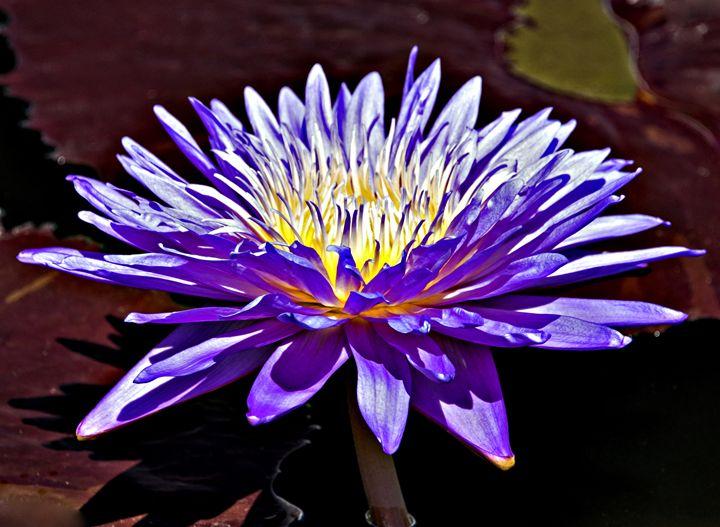 Purple Bloom - AllanE Photography