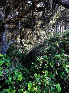 Tangle of Trees, Seal Rock, Oregon