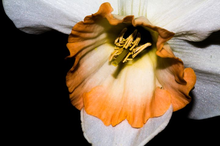 Flower - Leader Photography