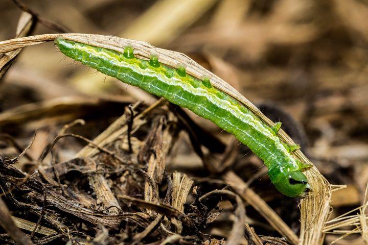 Caterpillar - Leader Photography
