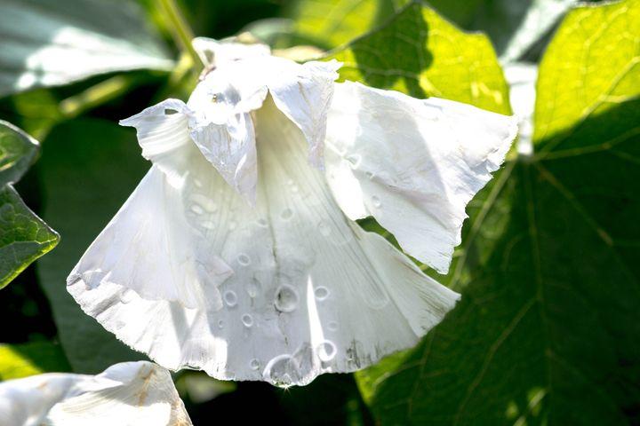 White Flower - Leader Photography