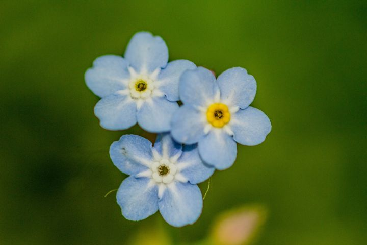 Blue Flowers - Leader Photography