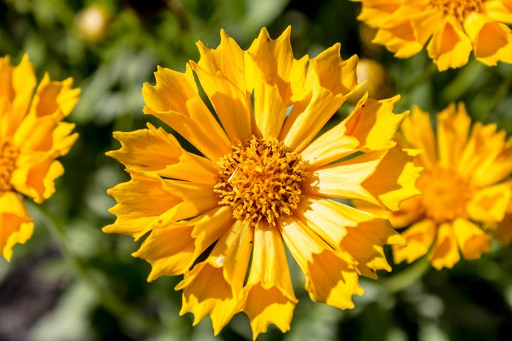 Yellow Flower - Leader Photography