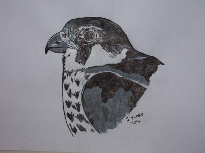 Hawk - paintings 4 u