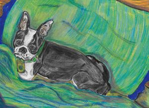 Boston Terrier on the Bed - Margie Shields McKee