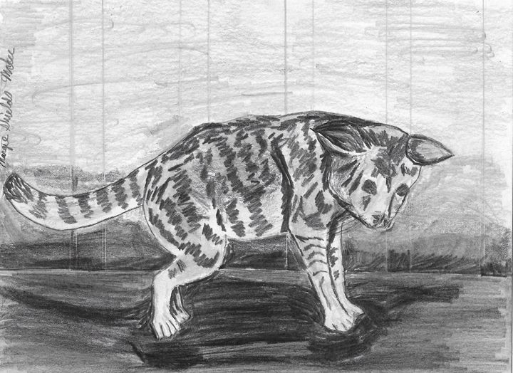 Cat In Pencil - Margie Shields McKee