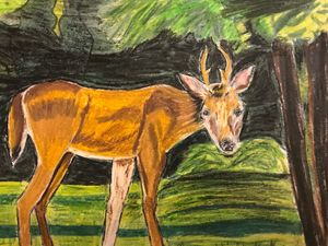 Small Antlered Deer