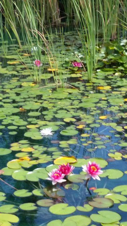 On pink pond - Soulstirrer