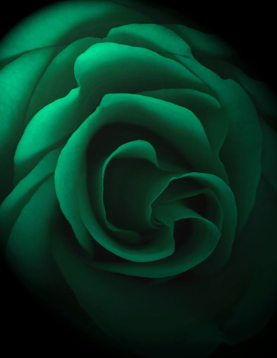 Emerald Rose - David Hughes