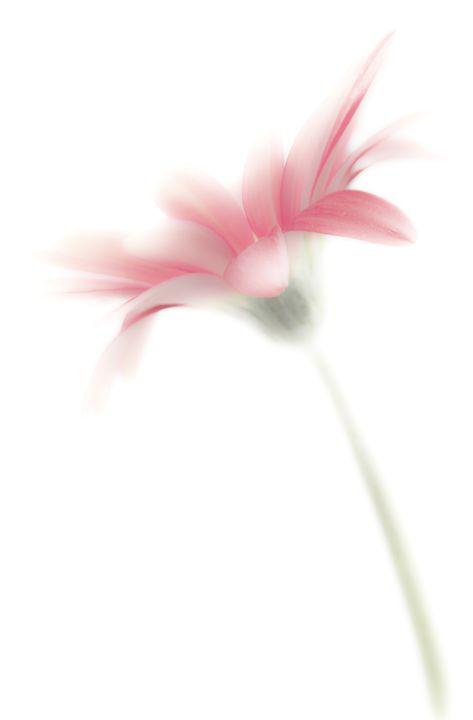 The Wall Flower - David Hughes