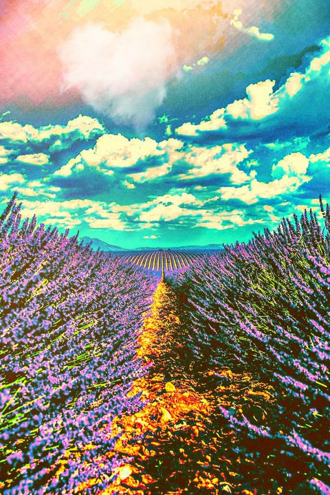 Lavender love - Auds and Ends