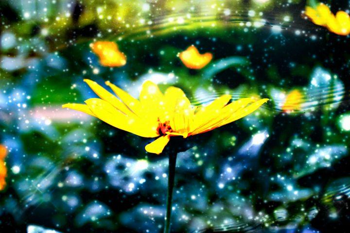 Flower Galaxy - Amy Bilodeau