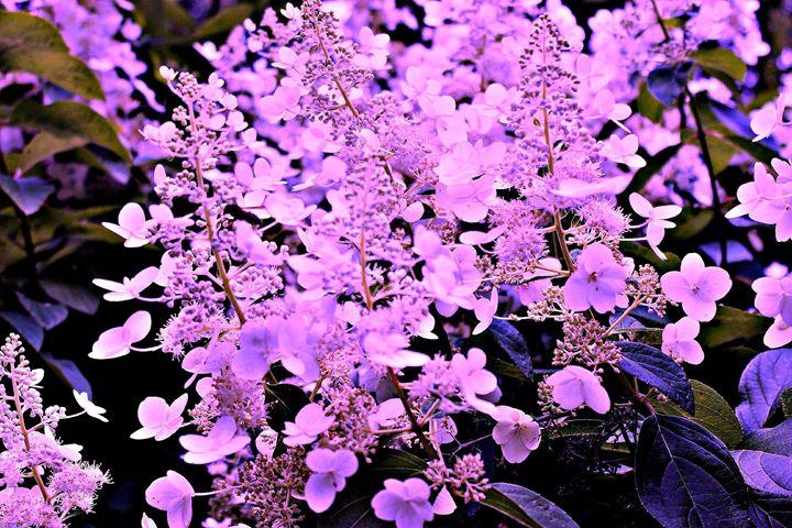 Purple Surprise - Amy Bilodeau