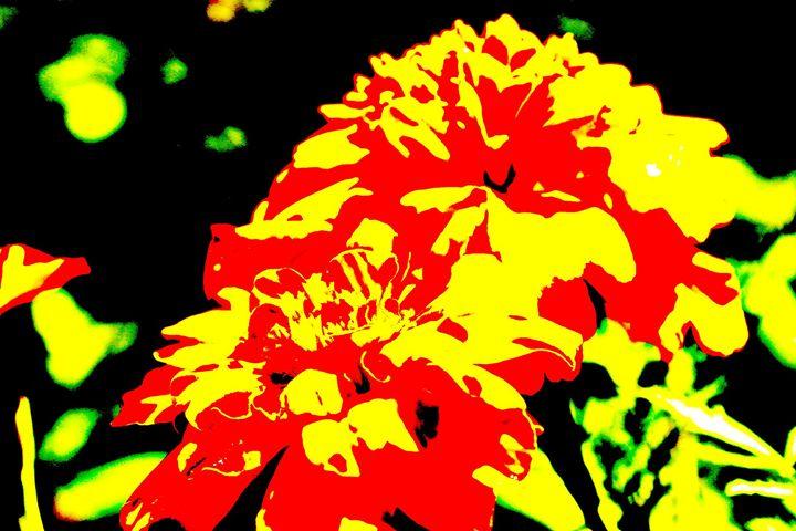 Darling Marigold - Amy Bilodeau