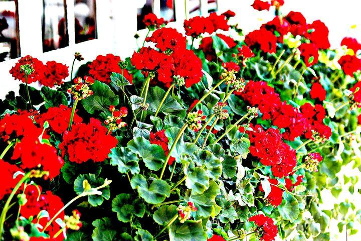 Windowsill Flowers - Amy Bilodeau