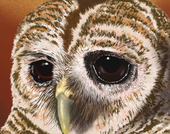 SPOTTED OWL - Chadsart