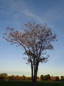 Shades of a Tree